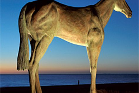 ETC in-ground uplights, illuminating Horse, a sculpture by Julie Squires on Mordialloc Beach.