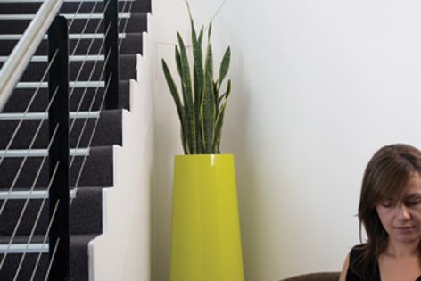 Ambius will install and service indoor plants like this one, which is in a yellow Blush planter.